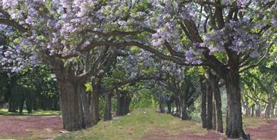 cropped-primavera1.jpg