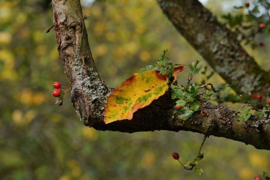 autumn-leaf-1679828_1280