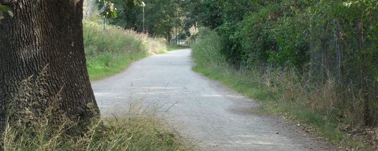 cropped-luca-molinari-photo-etiliyle-sentiero.jpg
