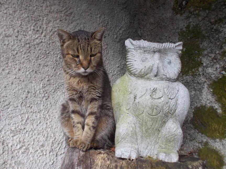 """Il giorno triste. Questa notte è morta LUNA, la gatta più """"relazionale"""" che abbiamo avuto. Aveva 17anni"""